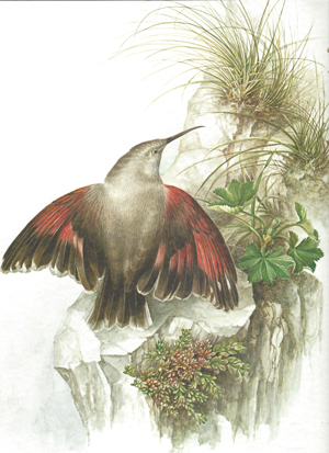 A bird and plants are living in a rocky area.