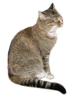 Domestic feline animals have a special attractiveness.