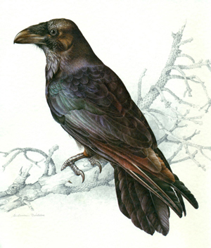 A black crow on a branch.