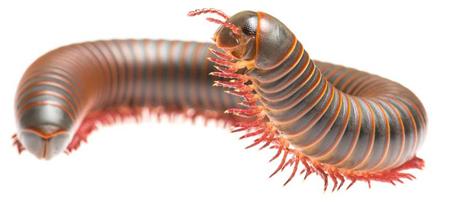 A millipede..