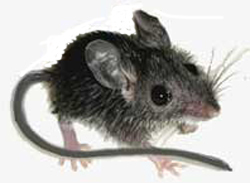One example of a mouse.