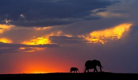An adult and a small elephant are walking across the horizon.