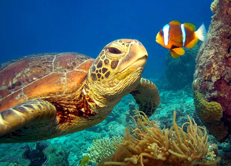 A fish and a turtle are examples of two ocean creatures.