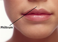 Area below the nose and above the lips of humans.