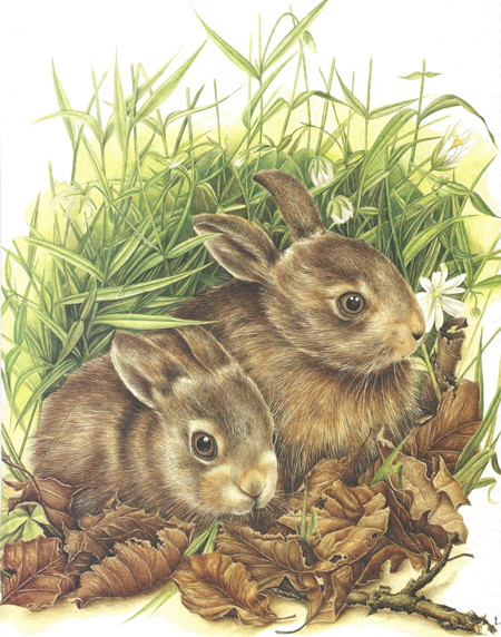 Two rabbits in the grass.