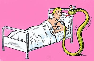 Aesculapian snake serving as a nurse.